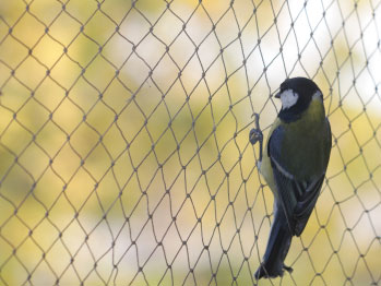 防鳥ネット